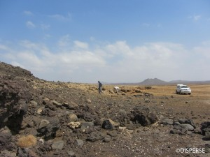 Fig. 3.  Fossil coral terrace overlying a lava flow, Harrat Al Birk, Asir Province. Photo: R. Inglis, 2013