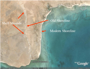 Fig. 3. Aerial view of shell mounds on Janaba West palaeoshoreline